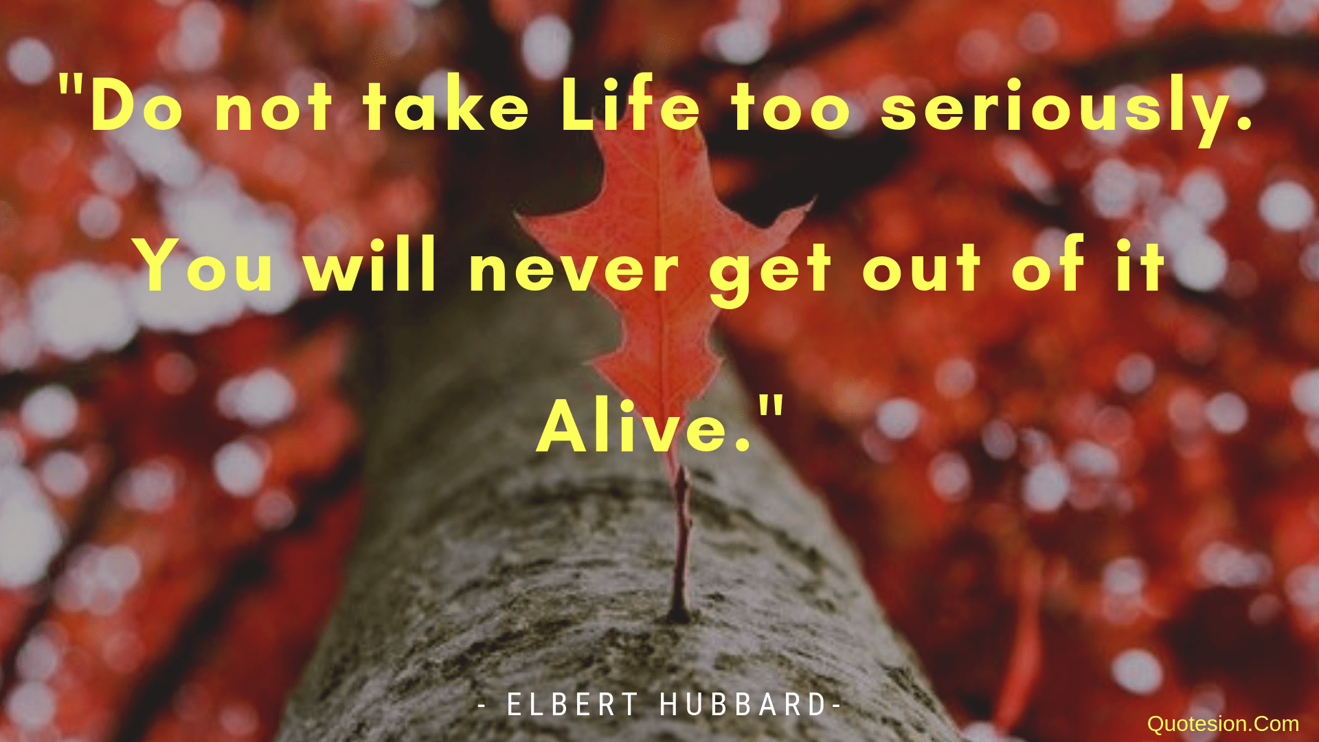 """Do not take life Too Seriously….-Elbert Hubbard- [1920×1080]"