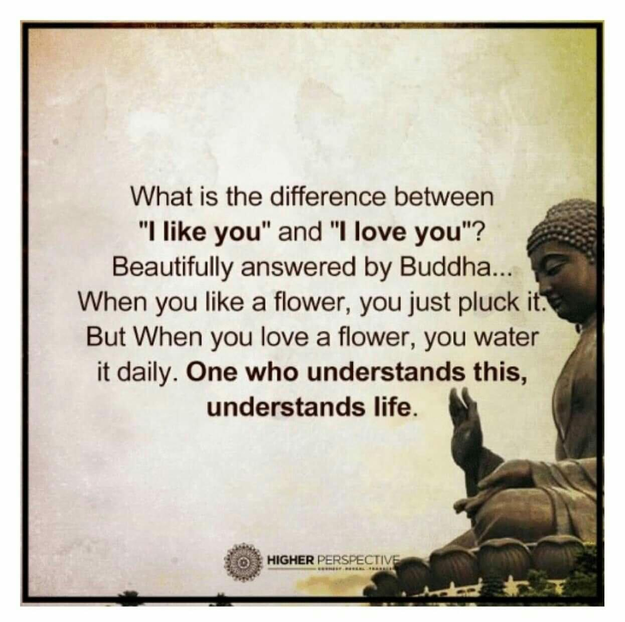 "What is the difference between "" I like you"" and ""I lobe you""….. Buddha. [1246 x 1240]"