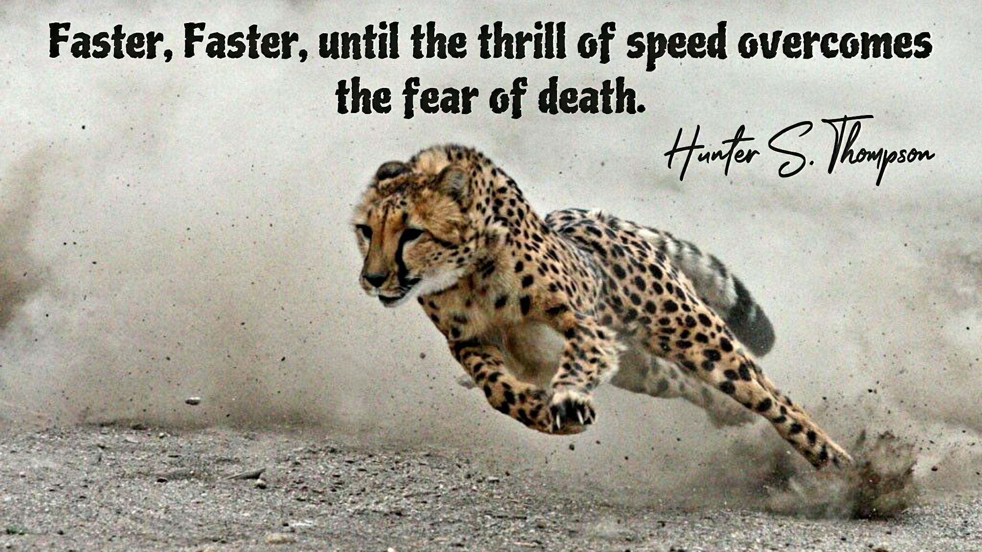 [Image]The thrill of speed overcomes the fear of death.