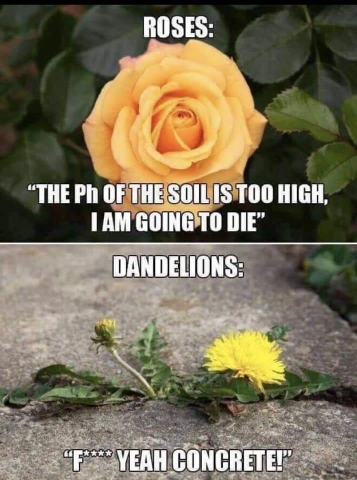 [image] Be a dandelion