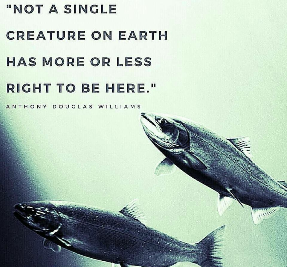 """Not a single creature on earth has more or less right to be here"" – Anthony Douglas Williams [960×891]"