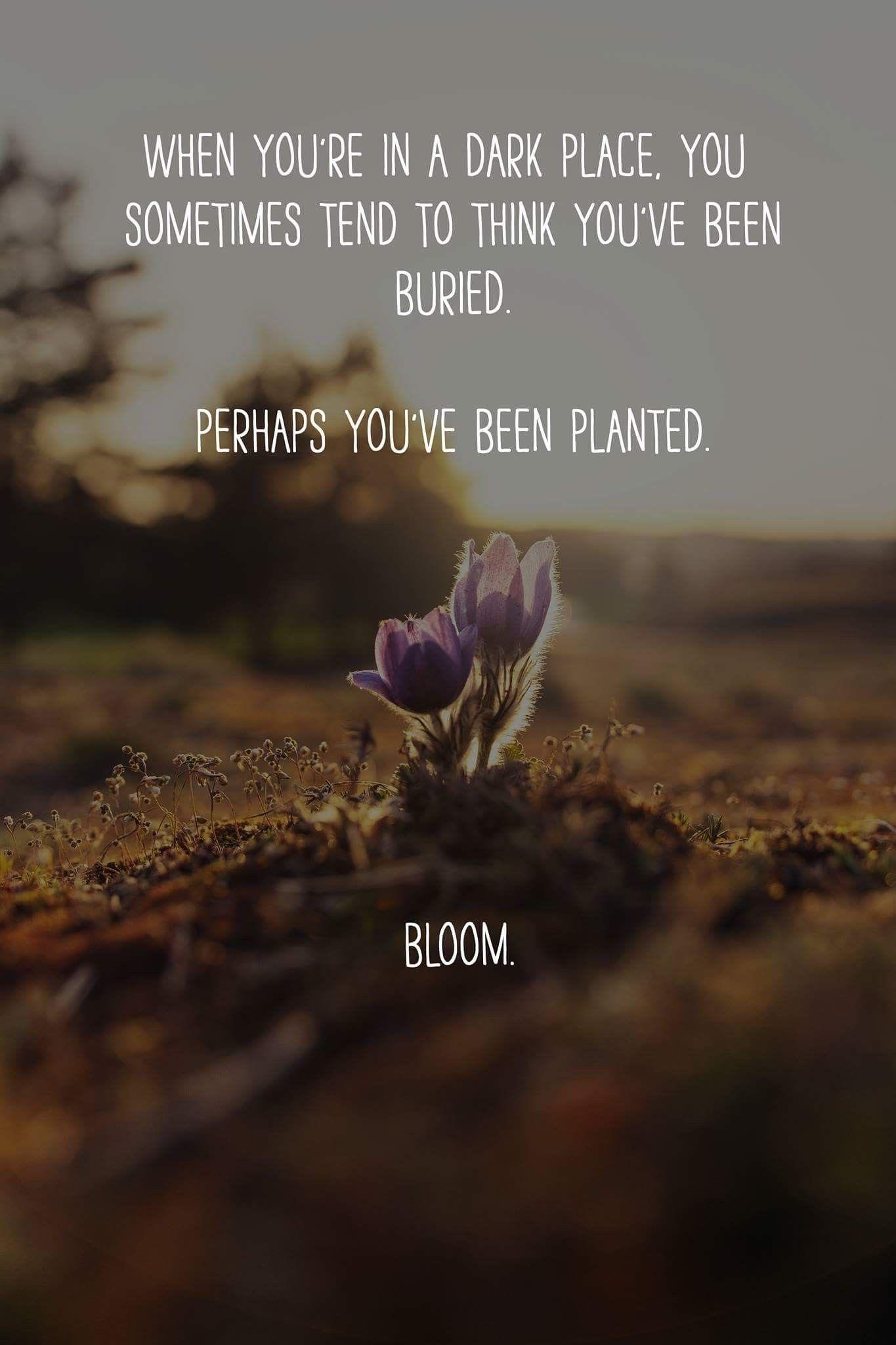 [Image] bloom 🌻