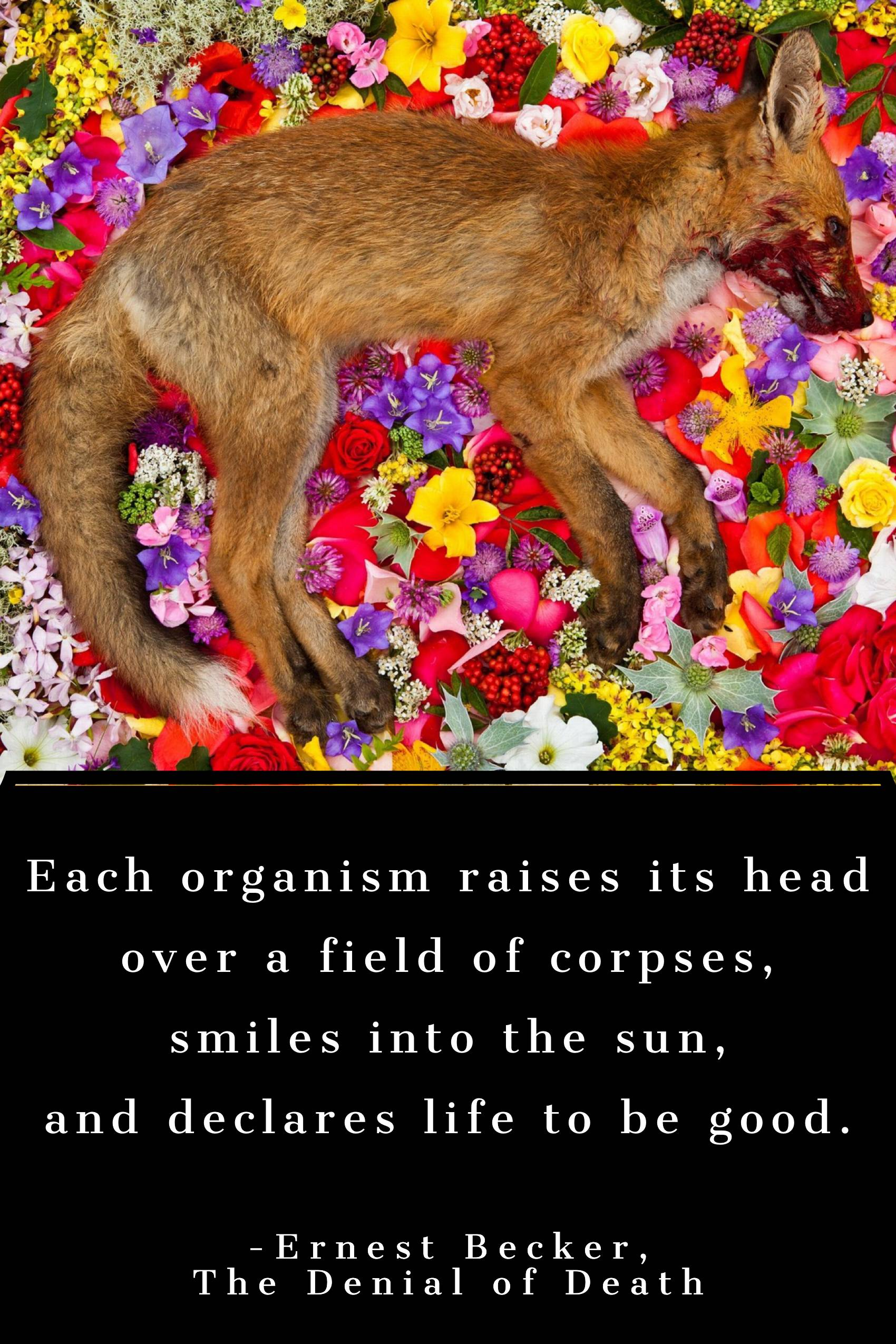 Each organism raises its head over a field of corpses… -Ernest Becker [1700×2550] [OC]