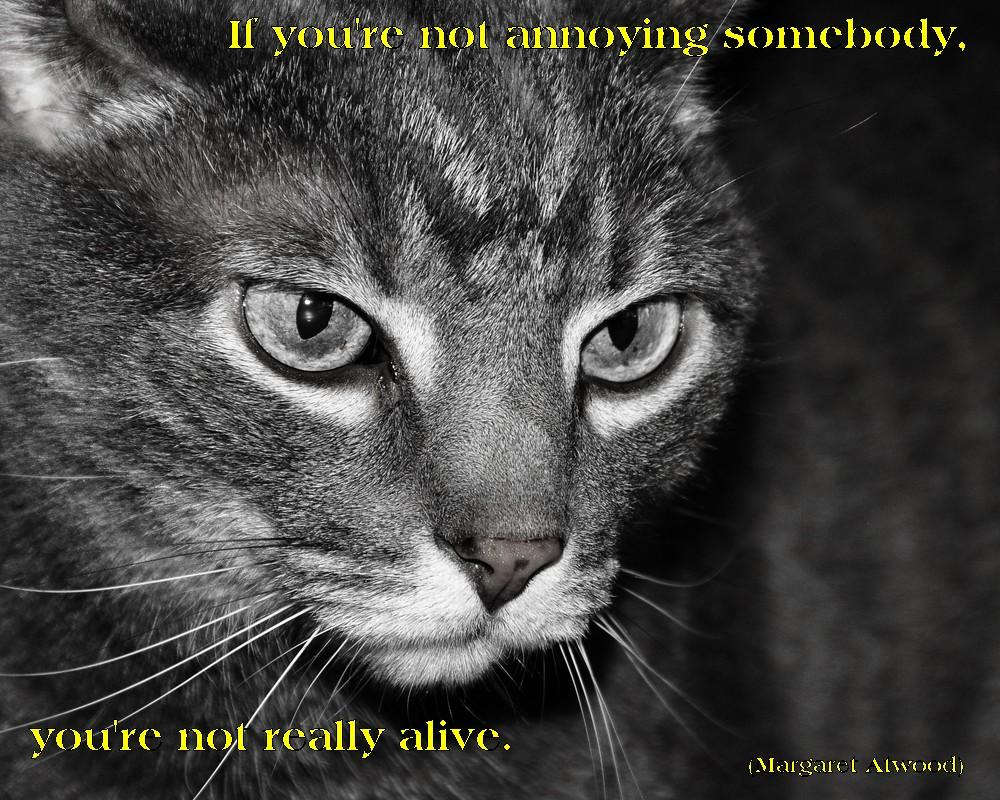"""If you're not annoying somebody, you're not really alive."" — Margret Atwood [1000×800]"
