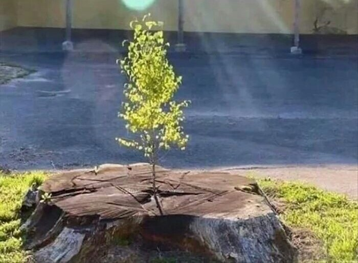 [Image] Just like this tree, you can start all over again. It is never too late