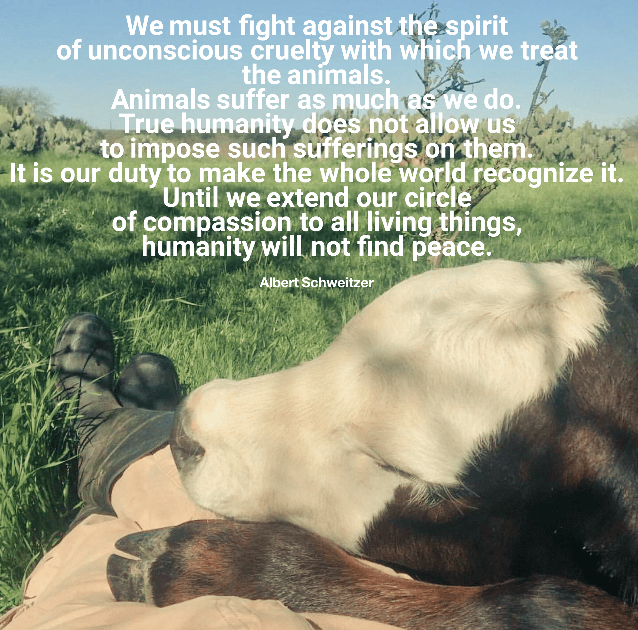"""We must fight against the spirit of unconscious curelty with which we treat the animals…"" -Albert Schweitzer [2048×2023]"