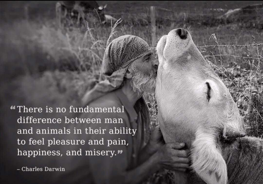 """There is no fundamental difference between man and animals in their ability to feel pleasure and pain, happiness, and misery."" -Charles Darwin [1080×756]"