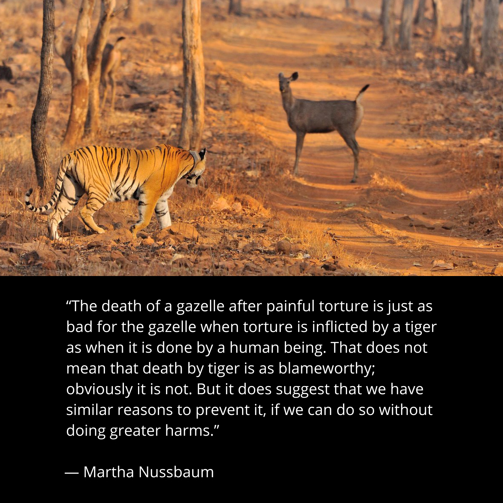 """The death of a gazelle after painful torture is just as bad for the gazelle when torture is inflicted by a tiger as when it is done by a human being…"" -Martha Nussbaum [1600 x 1600]"