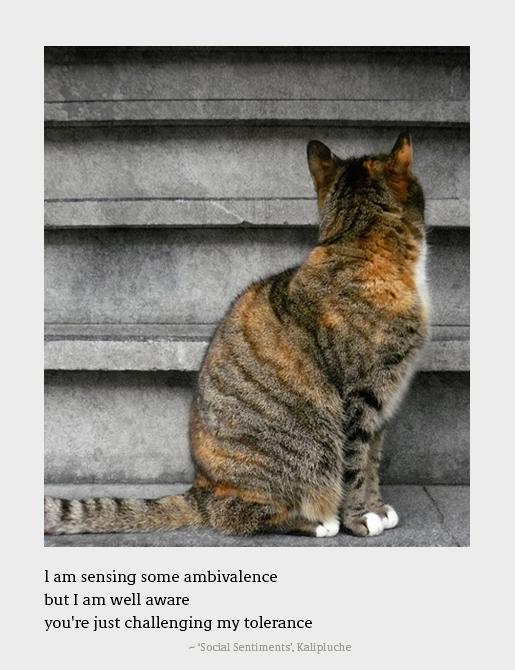 """""""I am sensing some ambivalence"""" – Kalipluche [515×670]"""