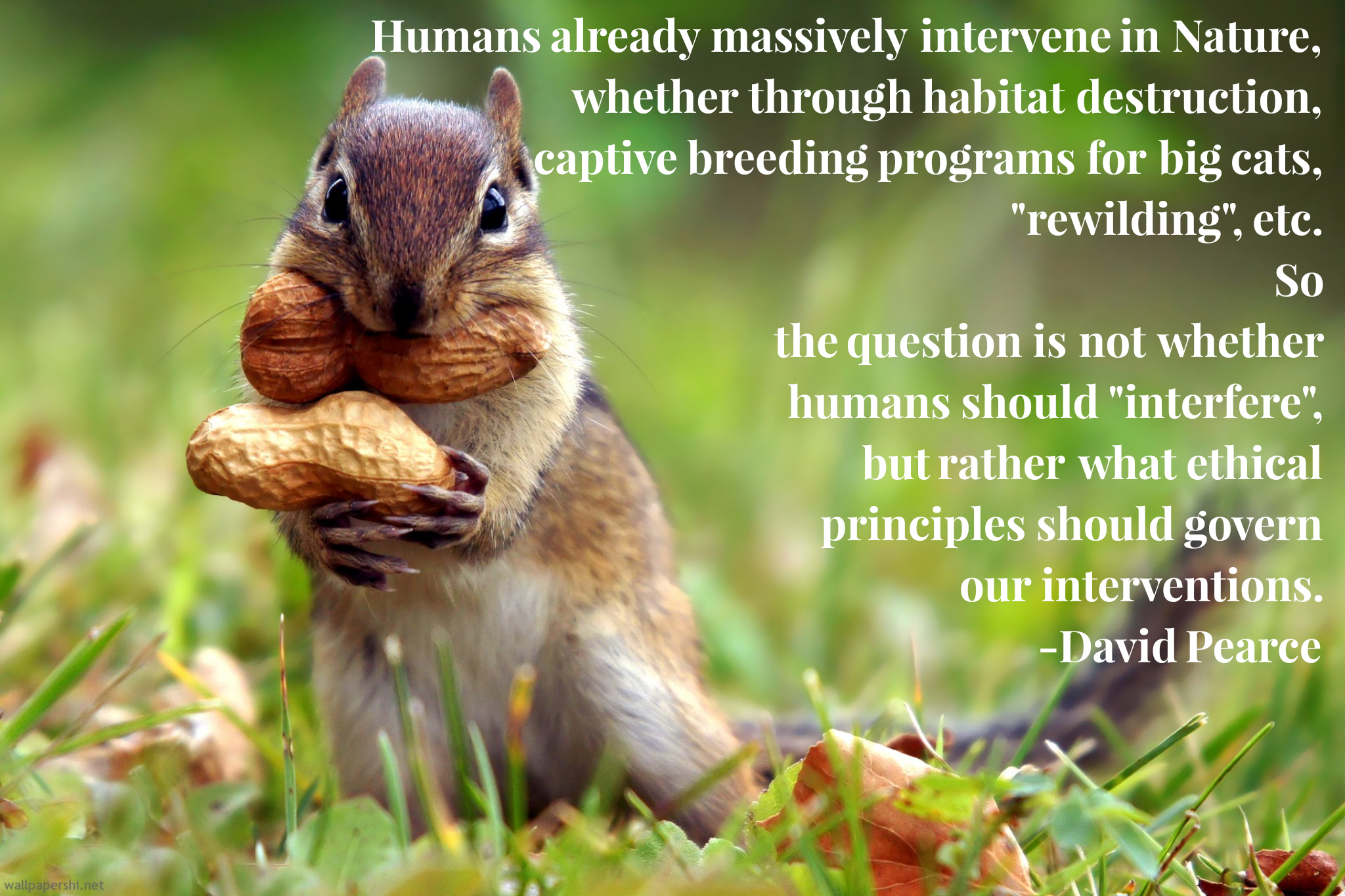 """Humans already massively intervene in Nature…"" -David Pearce [2048×1365]"