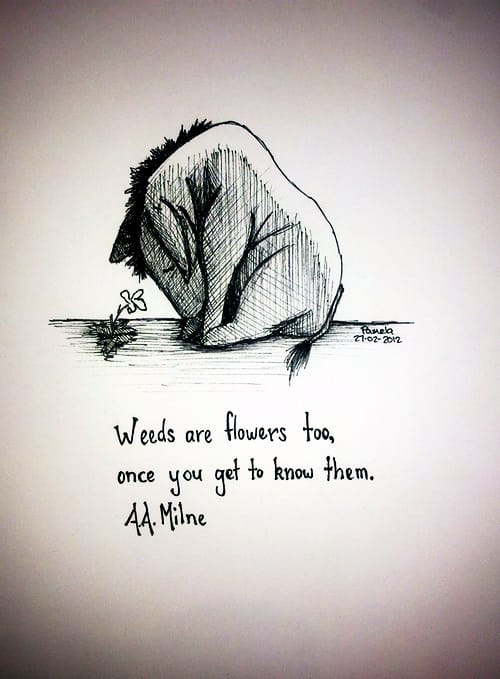 """Weeds are flowers too, once you get to know them. "" ~ A.A. Milne [500 X 679]"