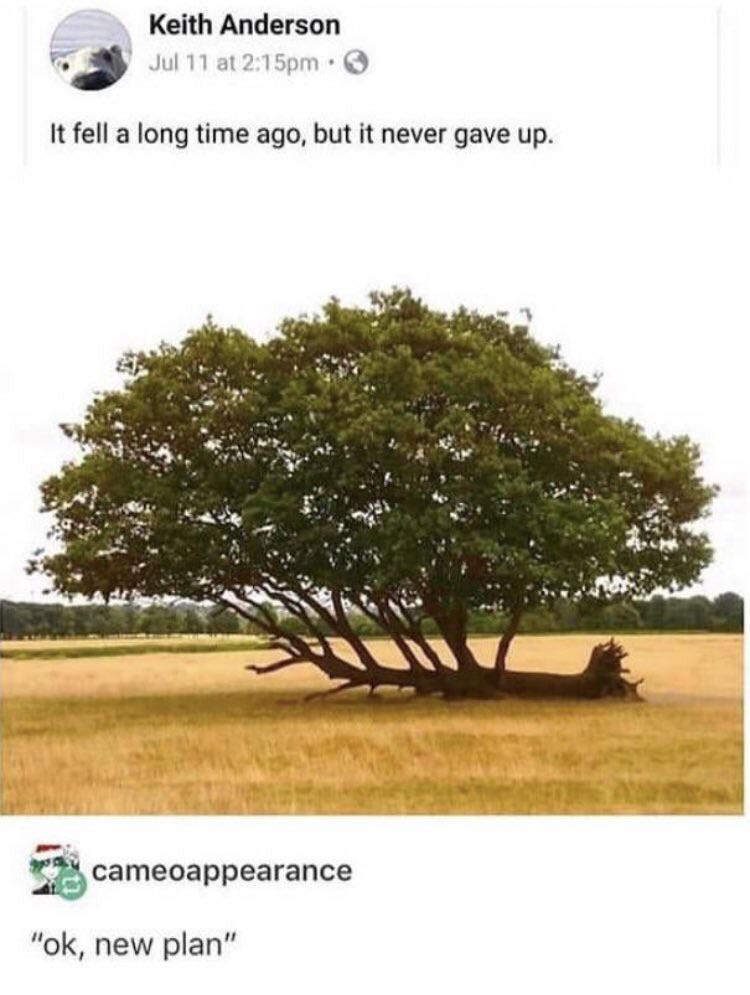 [Image] I thought this belonged here. Never give up!