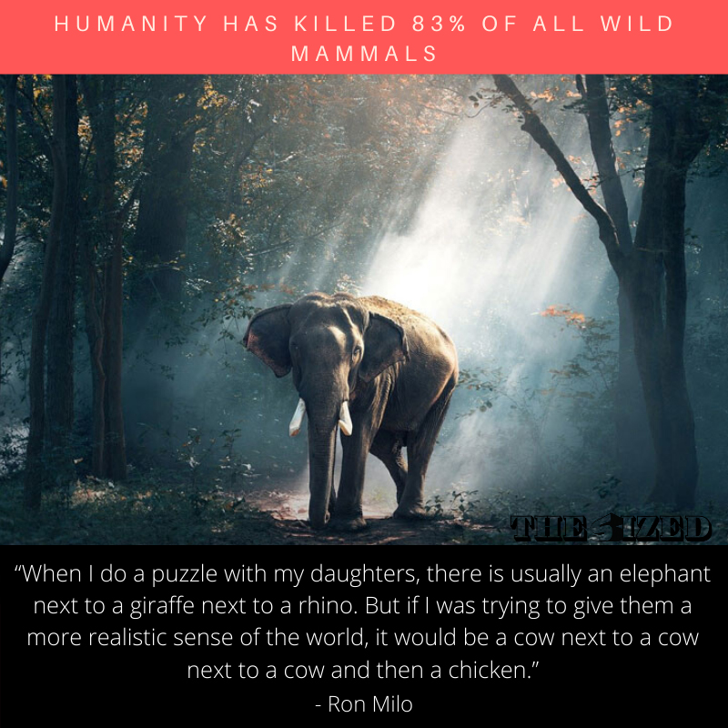 Humanity Has Killed 83% of All Wild Mammals
