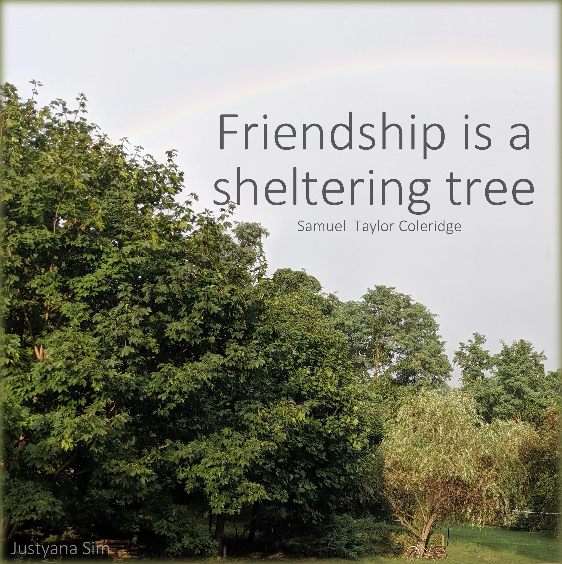 """Friendship is a sheltering tree"" -Samuel Taylor Coleridge (2363×2370)"