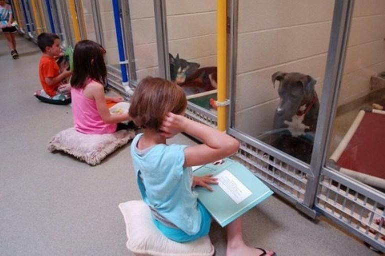 [Image] Special children practice reading books to shelter dogs so they don't feel alone