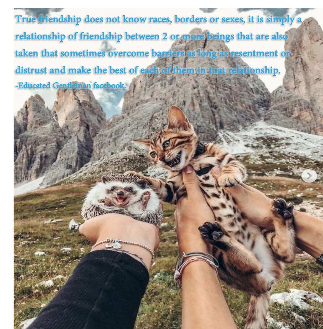 [Image] Nice friendship between animals