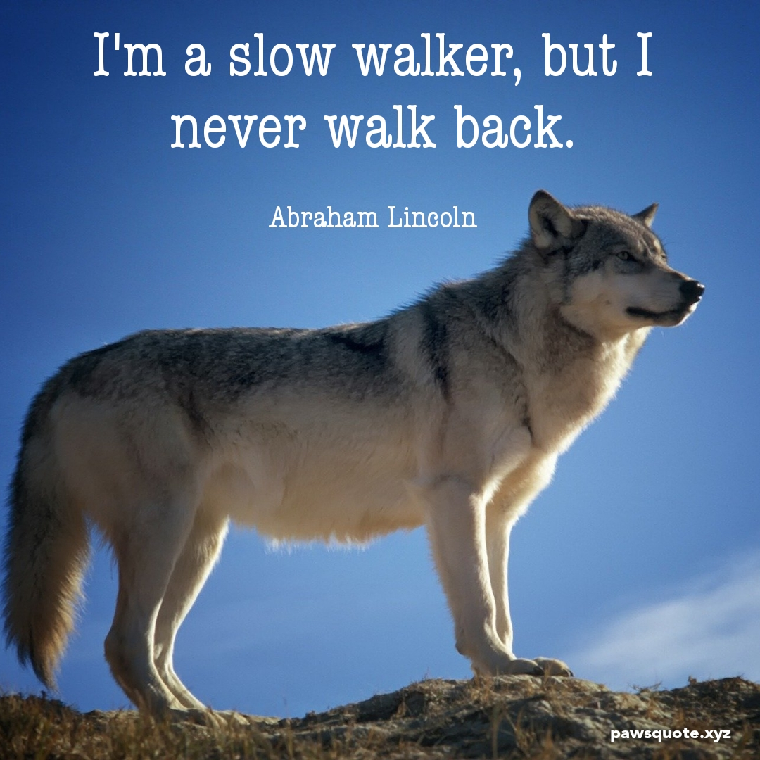 I'm a slow walker, but I never walk back. Abraham Lincoln (1080 x 1080)