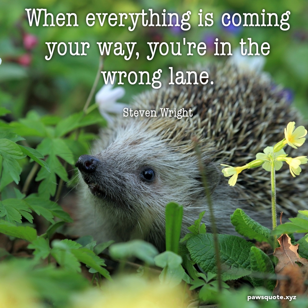 When everything is coming your way, you're in the wrong lane – Steven Wright (1080 x 1080)