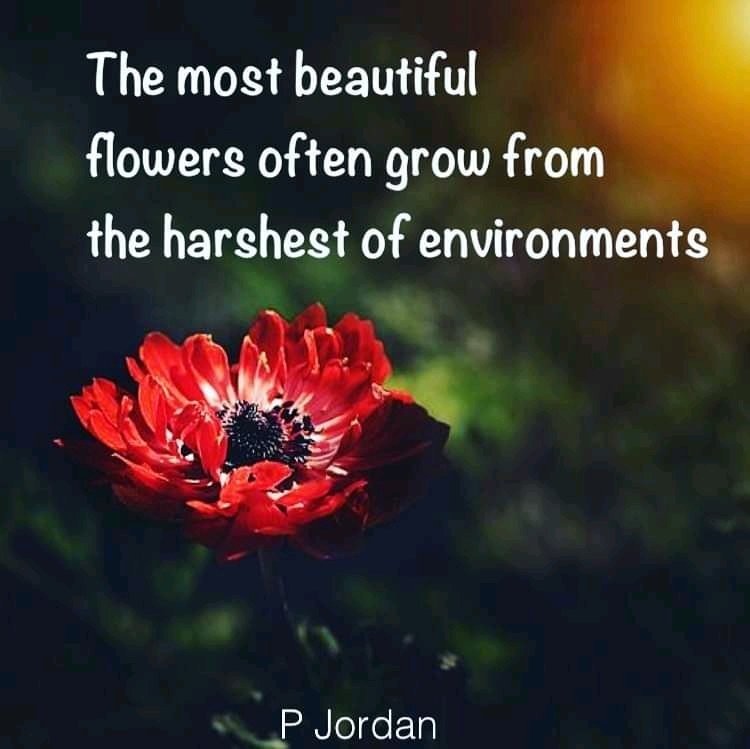 """The most beautiful flowers often grow from the harshest of environments . "" P Jordan. [1920 X 1080]"