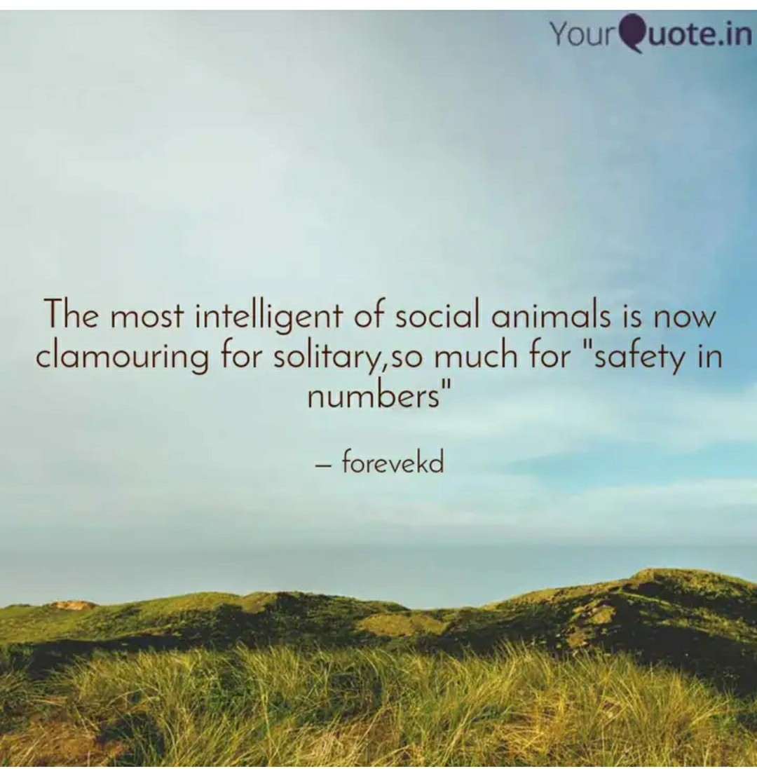 "The most in'relligen'r of social animals is W"" clamouring for solitary,so much For l'safe :flm numbers"" ' — https://inspirational.ly"