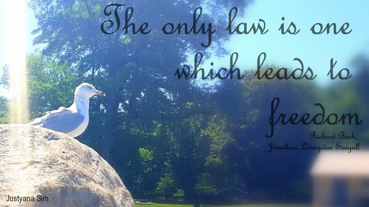 The only law is one which leads to freedom -Richard Bach (754×423)