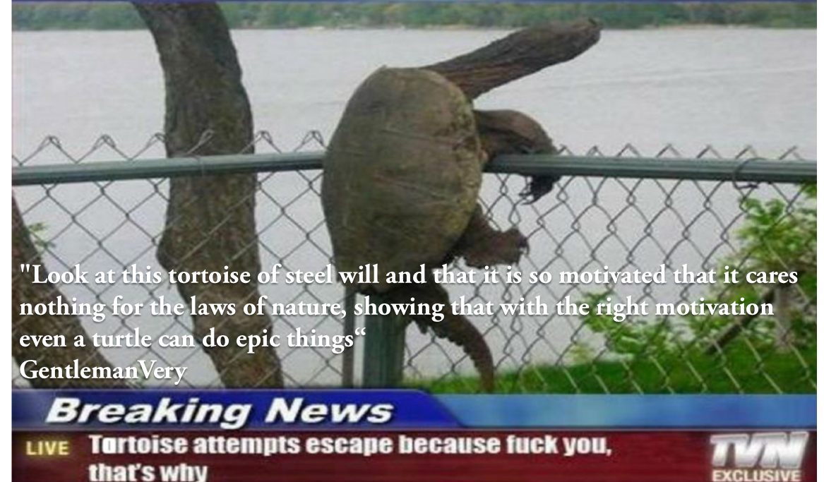 [Image] Rebel turtle shows us that with the right motivation nothing can stop you.