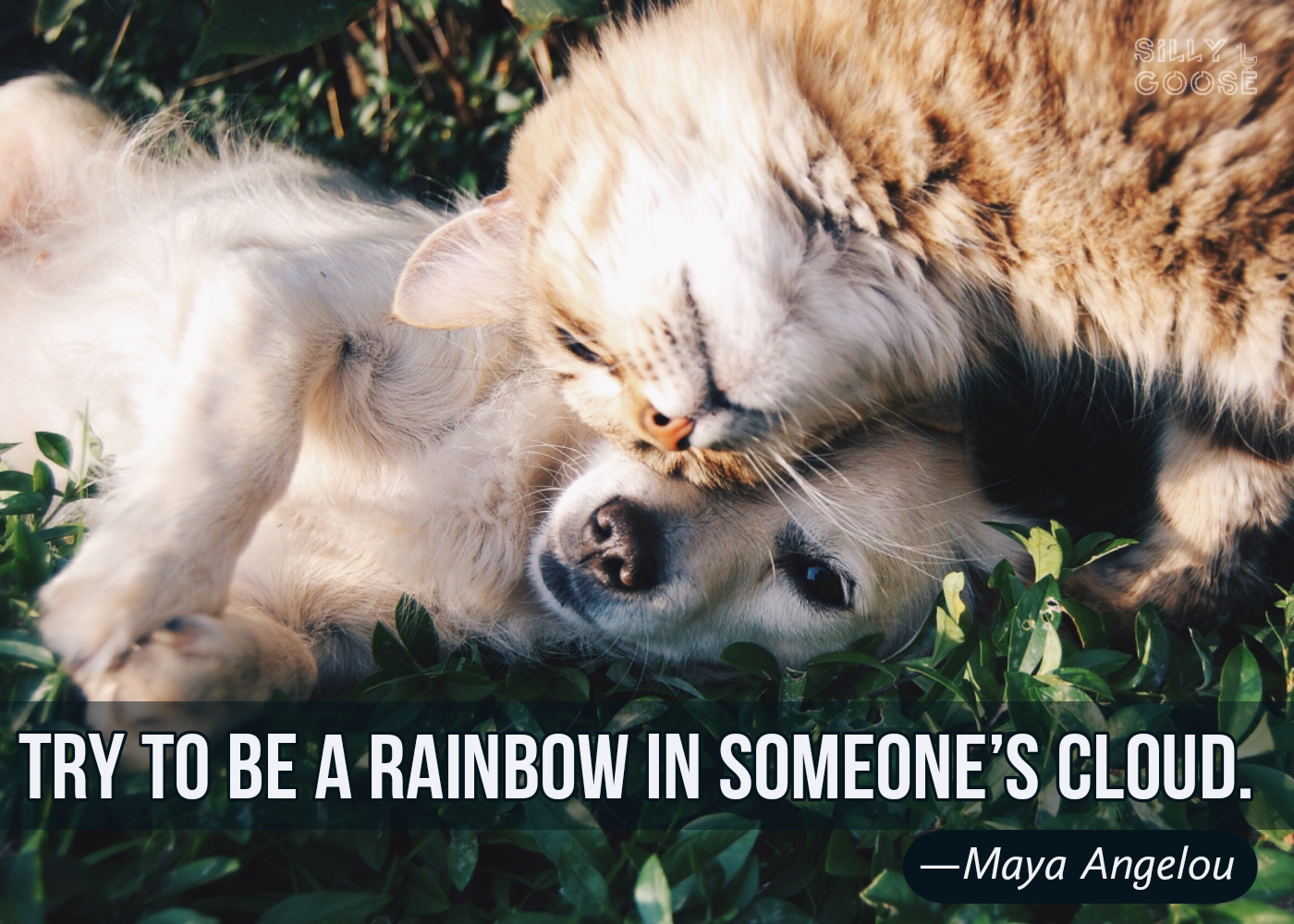 """Try to be a rainbow in someone's cloud."" —Maya Angelou [1400×1000]"