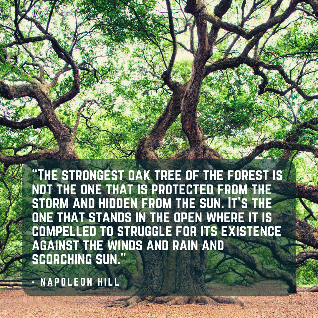 [Image] The Strongest Trees Growth in the Strongest Winds