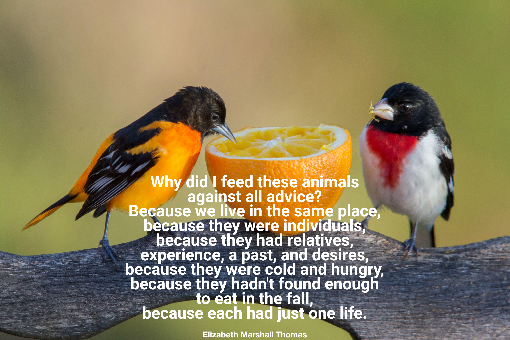 """Why did I feed these animals against all advice?.."" – Elizabeth Marshall Thomas [2048×1365]"