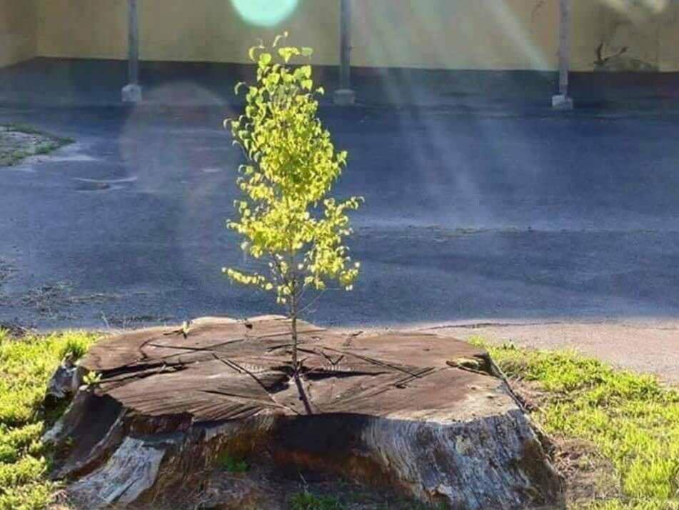 [Image] No matter what happens in life; you can always start over.