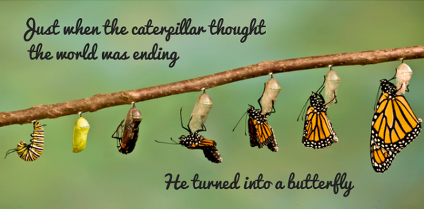 """Just when the caterpillar thought the world was ending, he turned into a butterfly."" – Proverb [615 x 303]"
