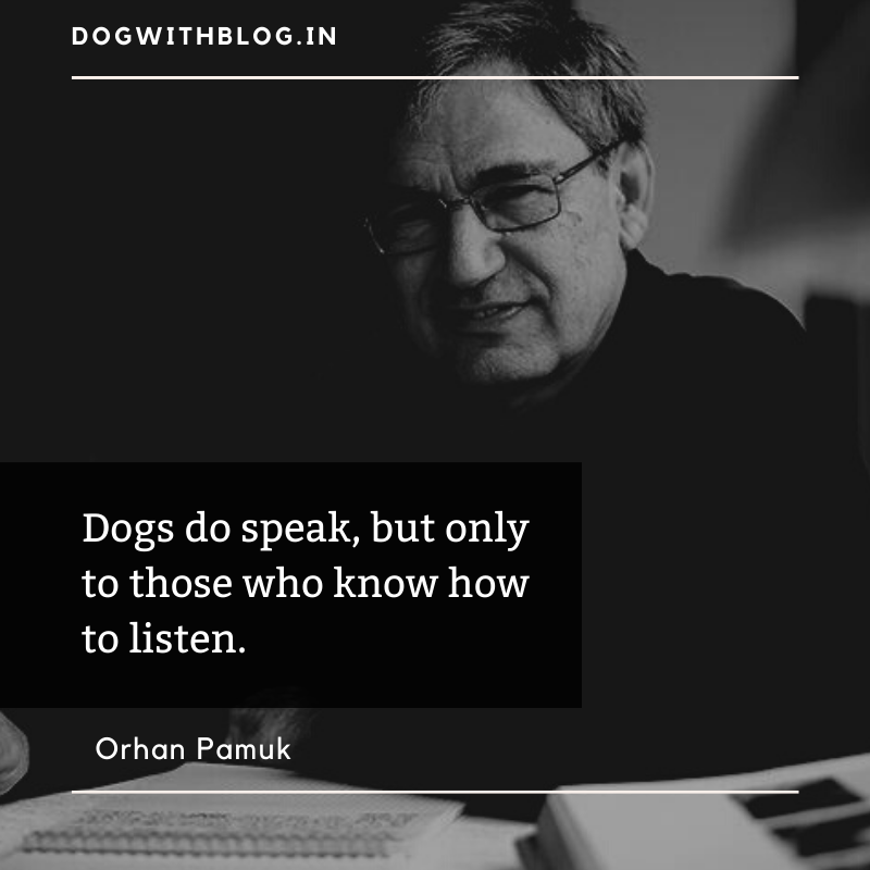 """Dogs do speak, but only to those who know how to listen.""– Orhan Pamuk [800*800]"