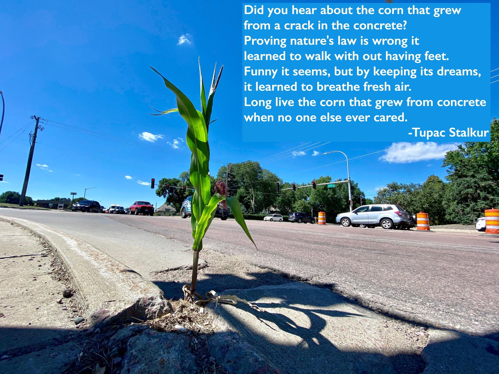 [image] This urban corn is all the motivation I need in 2020.