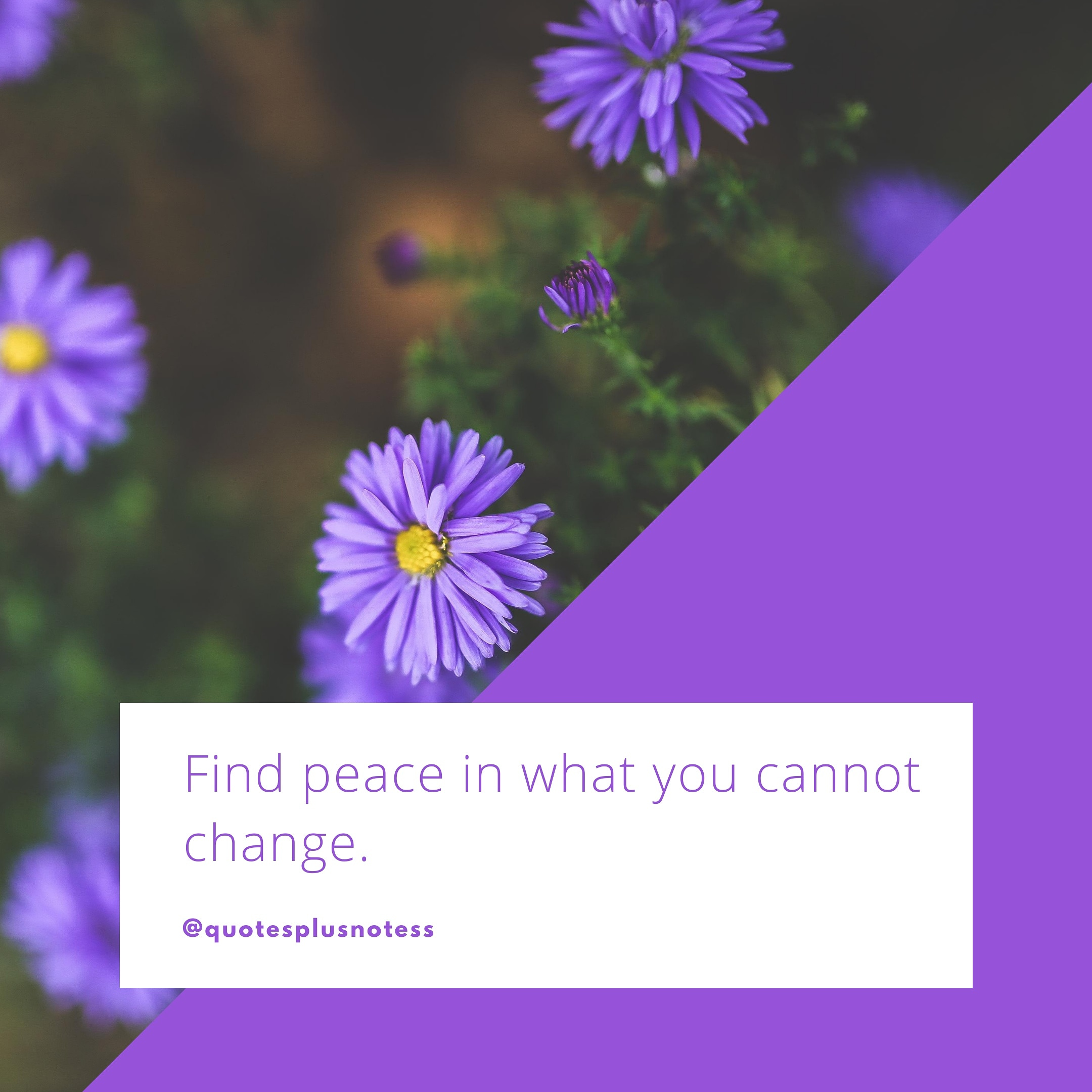 Find peace in what you cannot change. – quotesplusnotess [2160*2160]