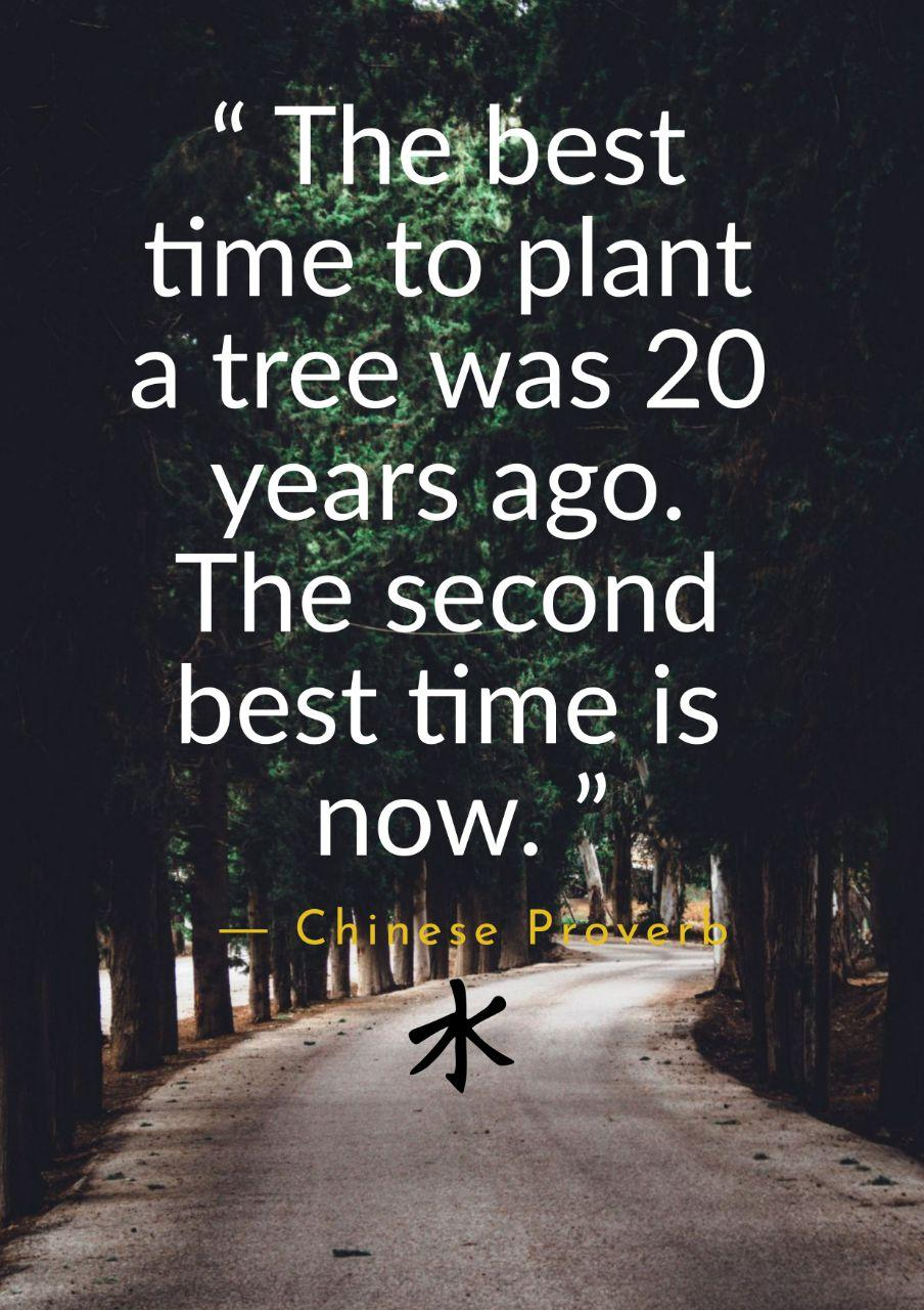 """The best time to plant a tree was 20 years ago. The second best time is now."" – Chinese Proverb (904×1280)"