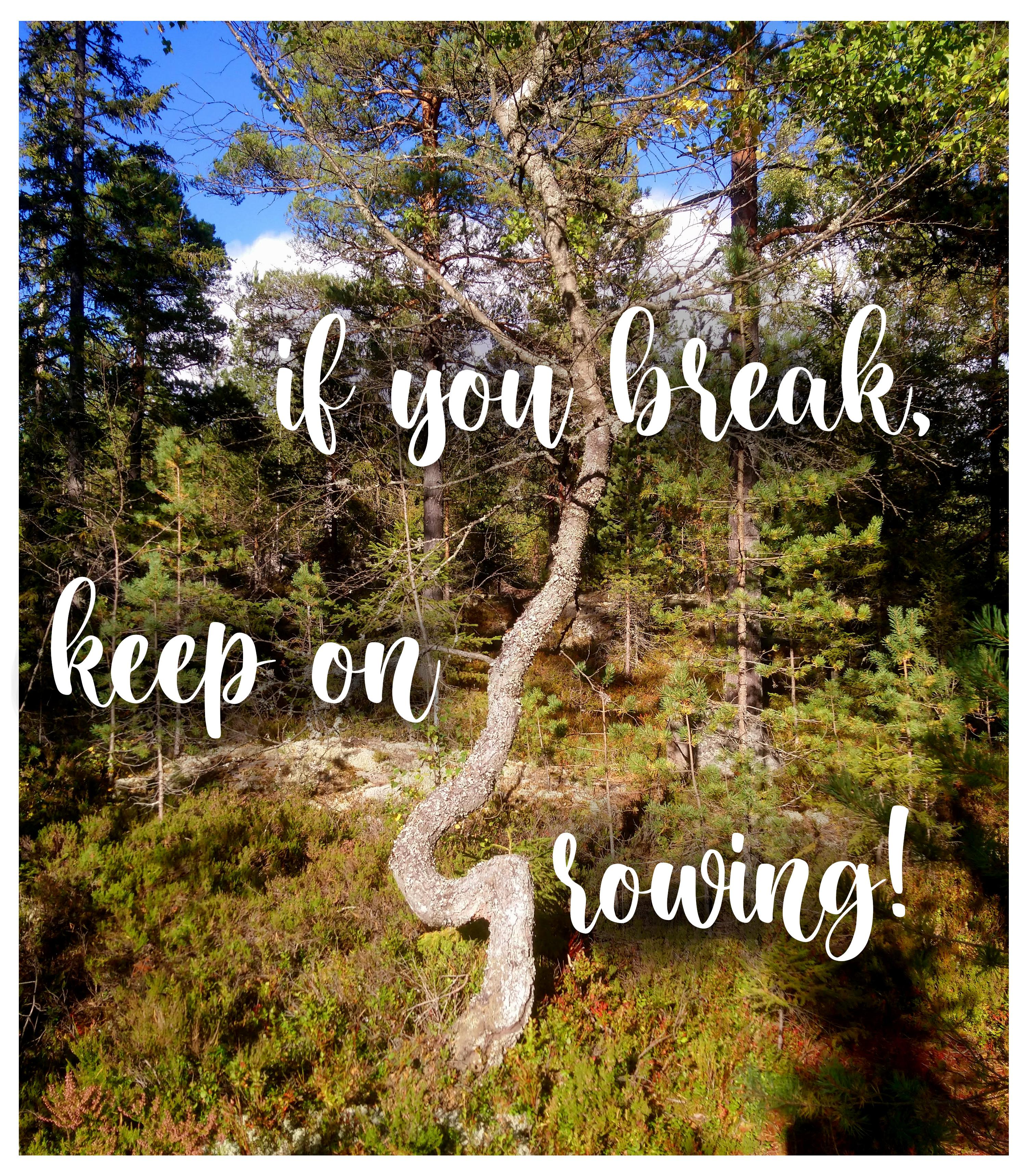 If you break, keep on growing! [Image]