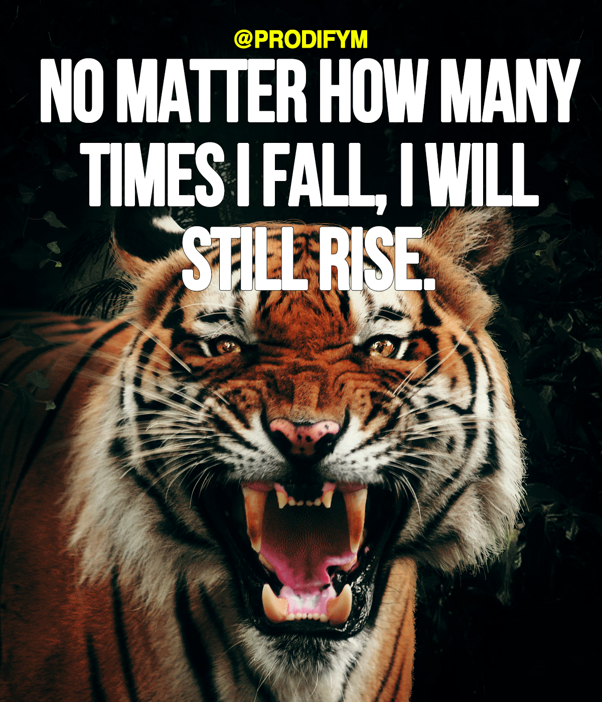 [Image]No matter how many times I fall, I still rise.