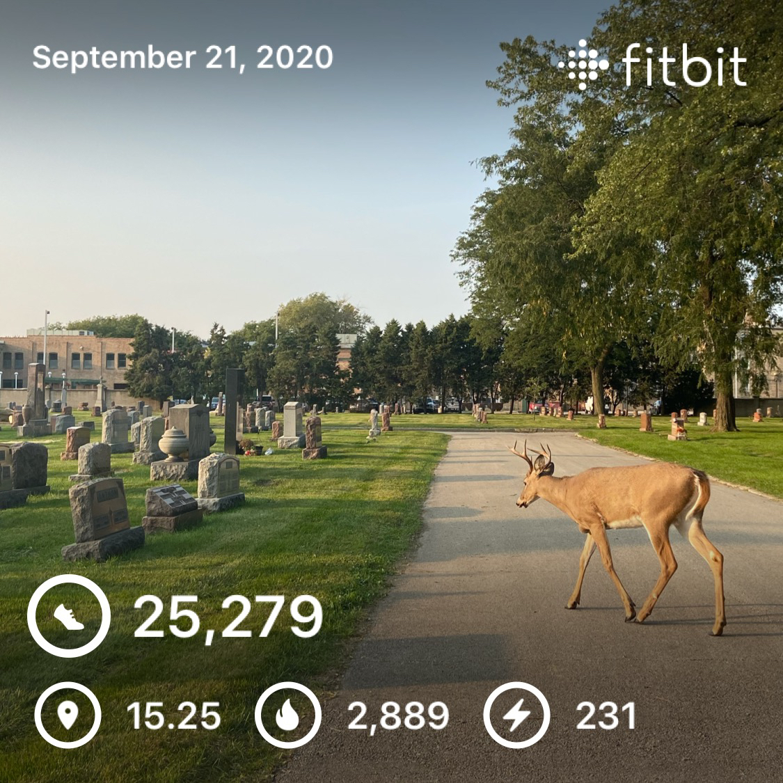 [IMAGE] I logged my all-time personal best day (since November '19) and made a friend at the cemetery. Lately, it feels like too much work to get out of bed and out of my apartment. Days like today help prove it's worth it.
