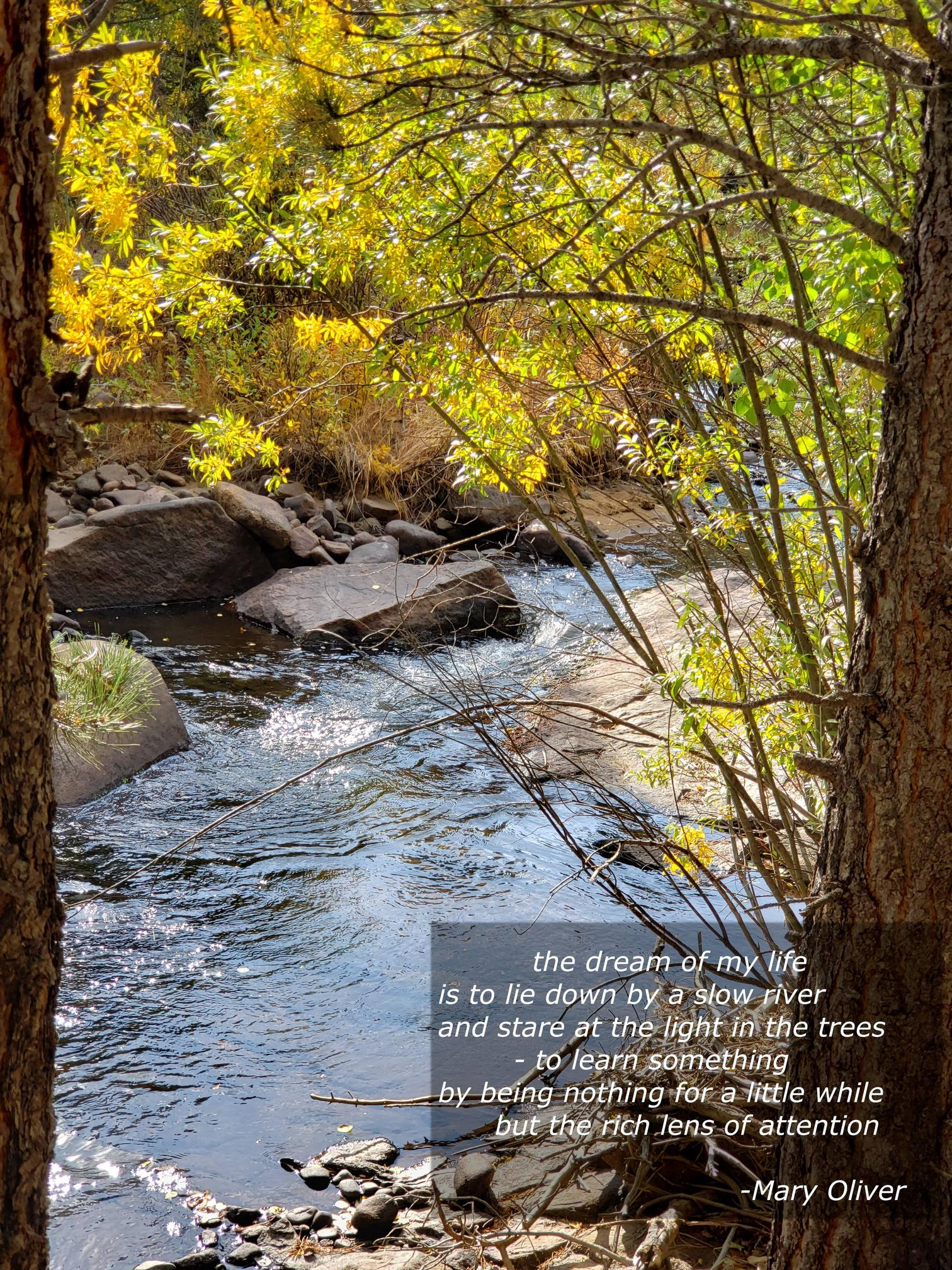 "[OC] ""The Dream of my Life is to lie down by a slow river…"" –Mary Oliver [1512 x 2016]"