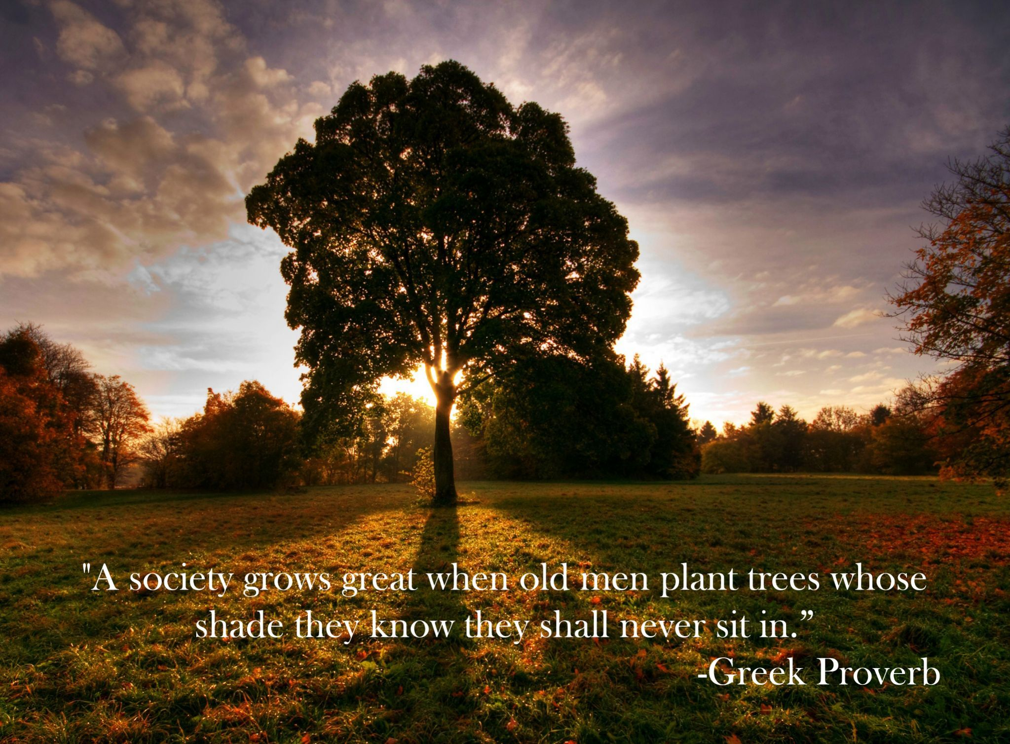 """A society grows great when old men plant trees whose shade they know they shall never sit in"" – Greek proverb [2047*1508]"