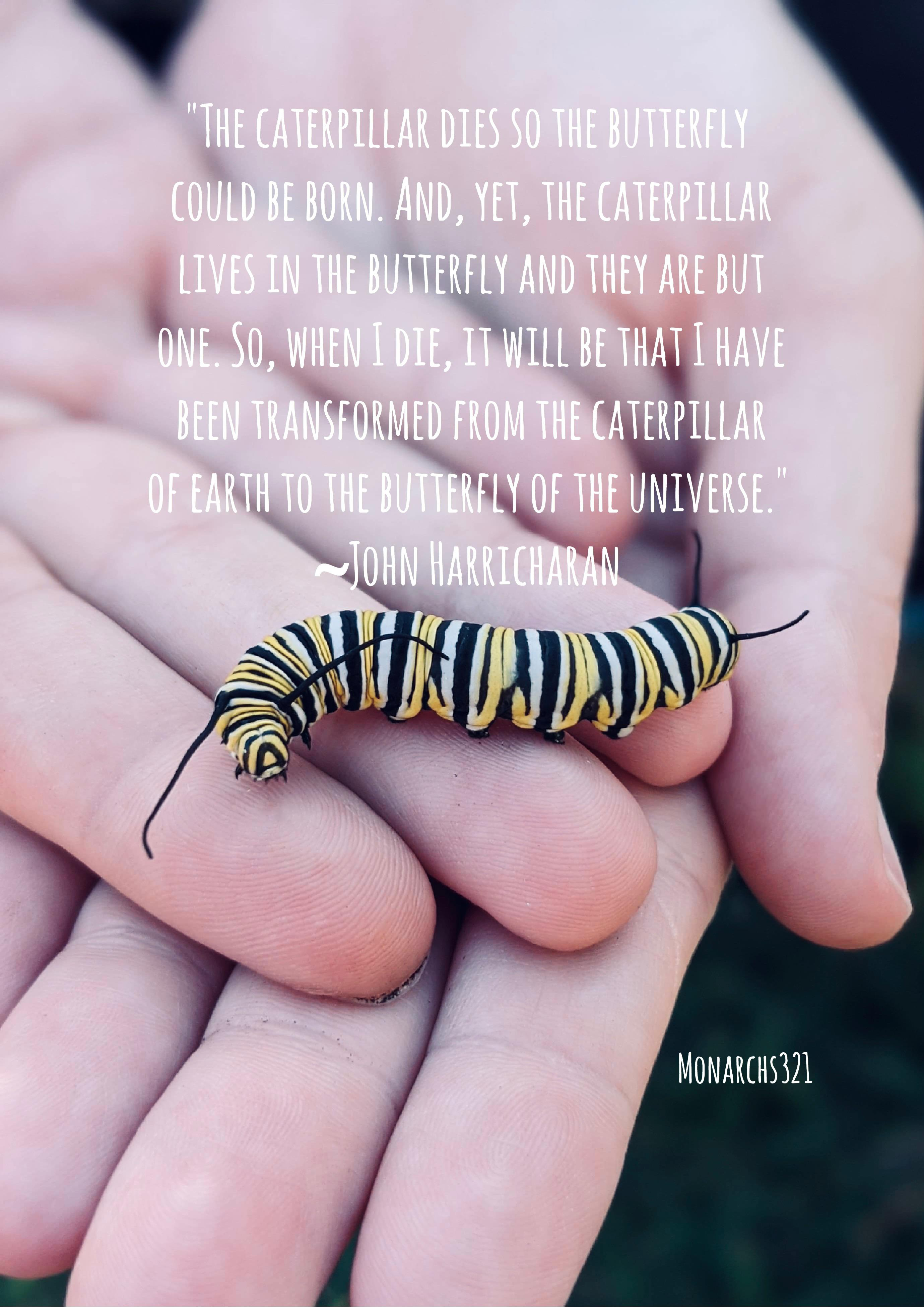 """The caterpillar dies so the butterfly could be born."" -John Harricharan [2758×3899]"