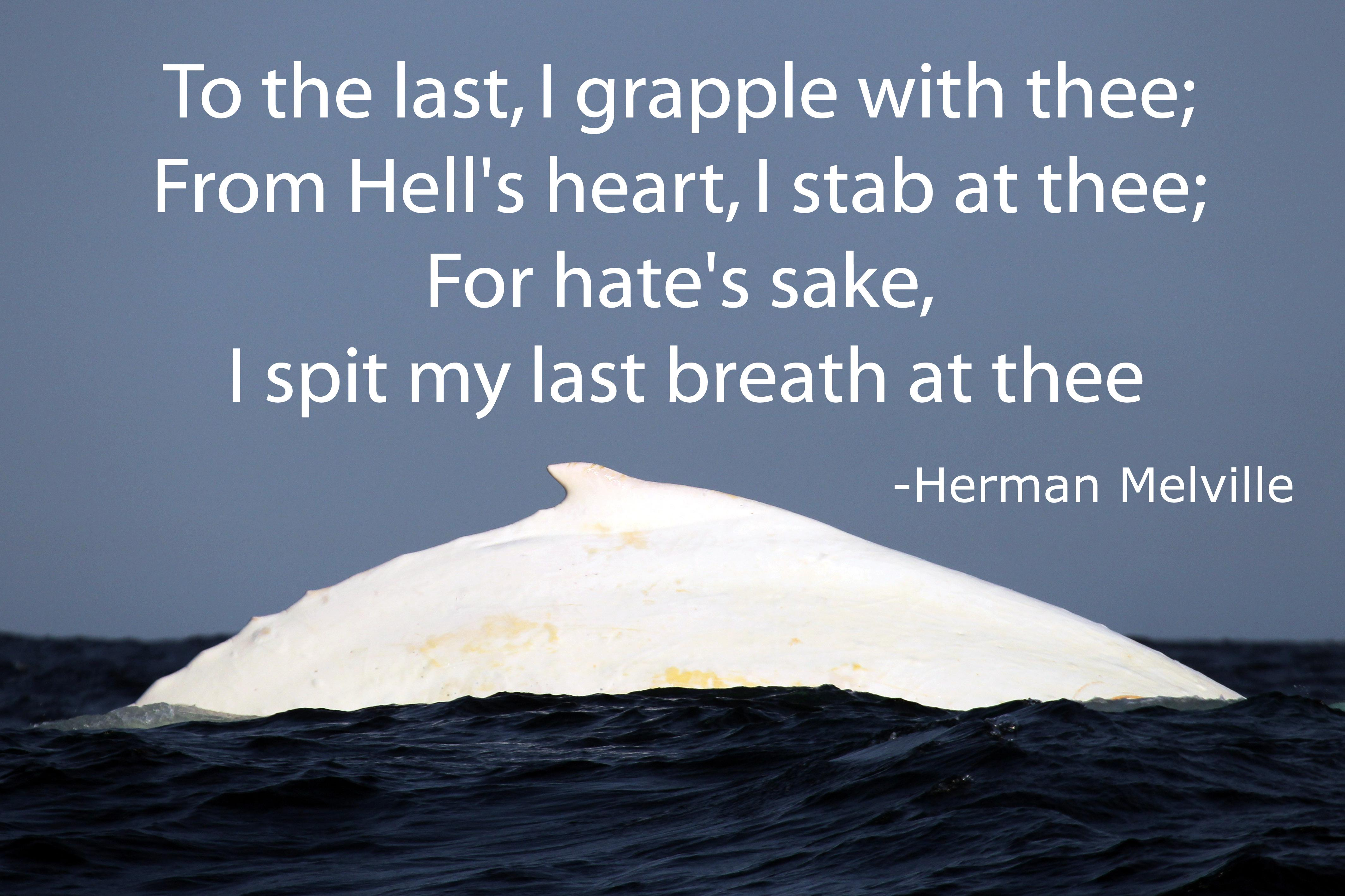 """"""" To the last, I grapple with thee; From Hell's heart, I stab at thee; For hate's sake, I spit my last breath at thee."""" Herman Melville {4255X2837}"""