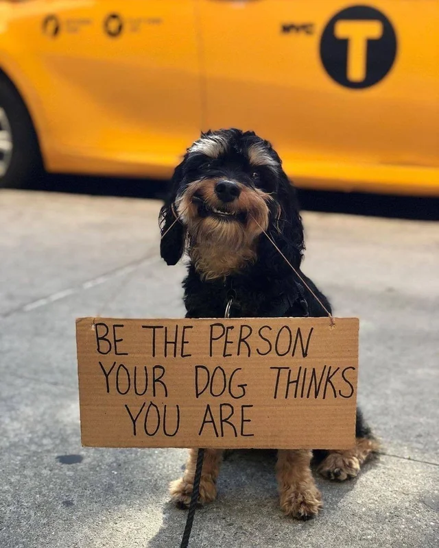[Image] r/rarepuppers is reminding you that dogs things you're great!