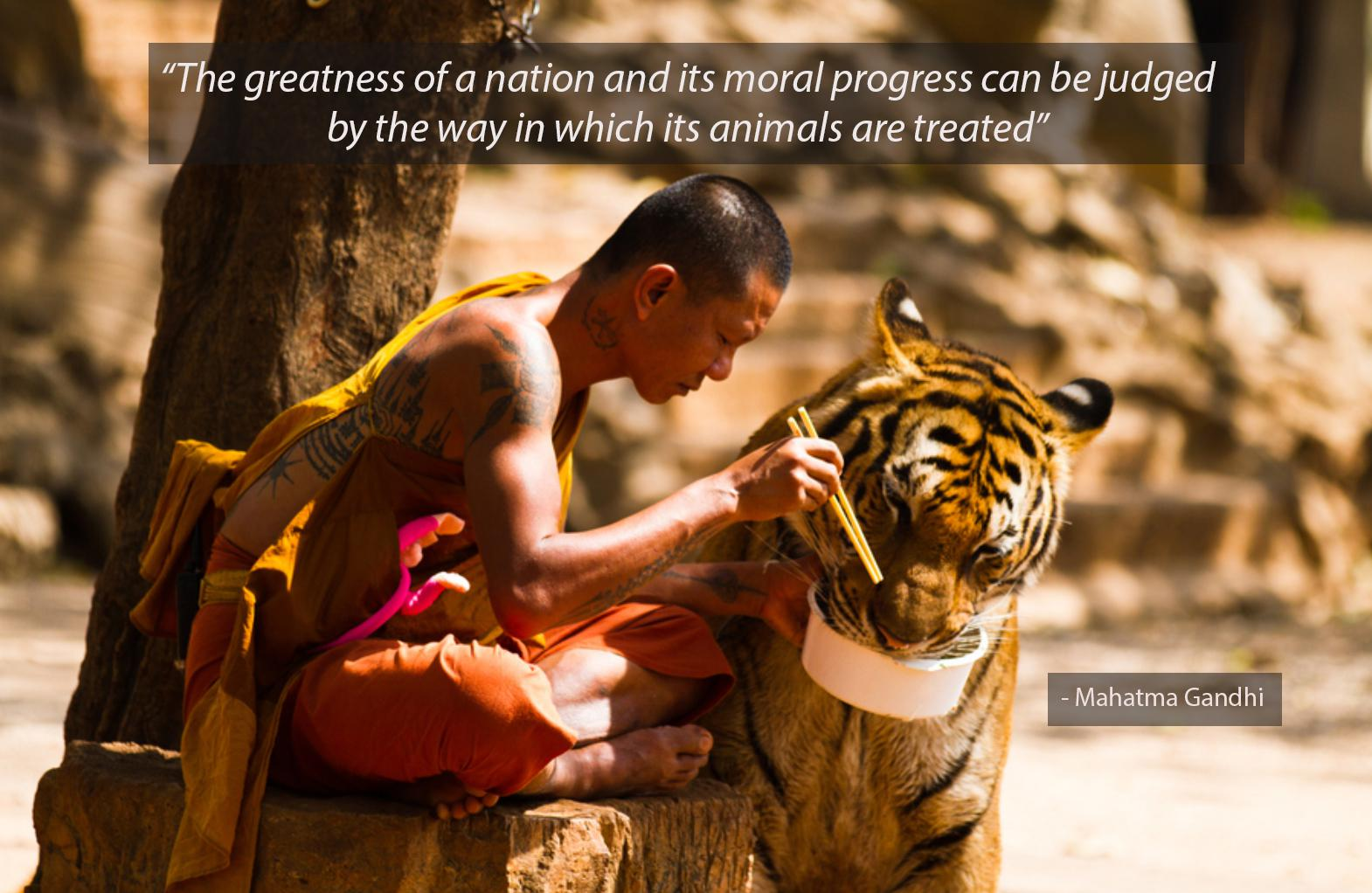 "The greatness of a nation and its moral progress can be judged by the way in which its animals are treated"" – Mahatma Gandhi [1570×1022]"