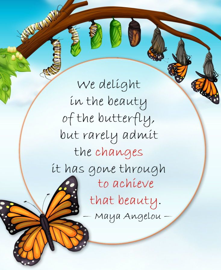 We delight in the beauty of the butterfly, but rarely admit the changes it has gone through to achieve that beauty. – Maya Angelou (734×896)