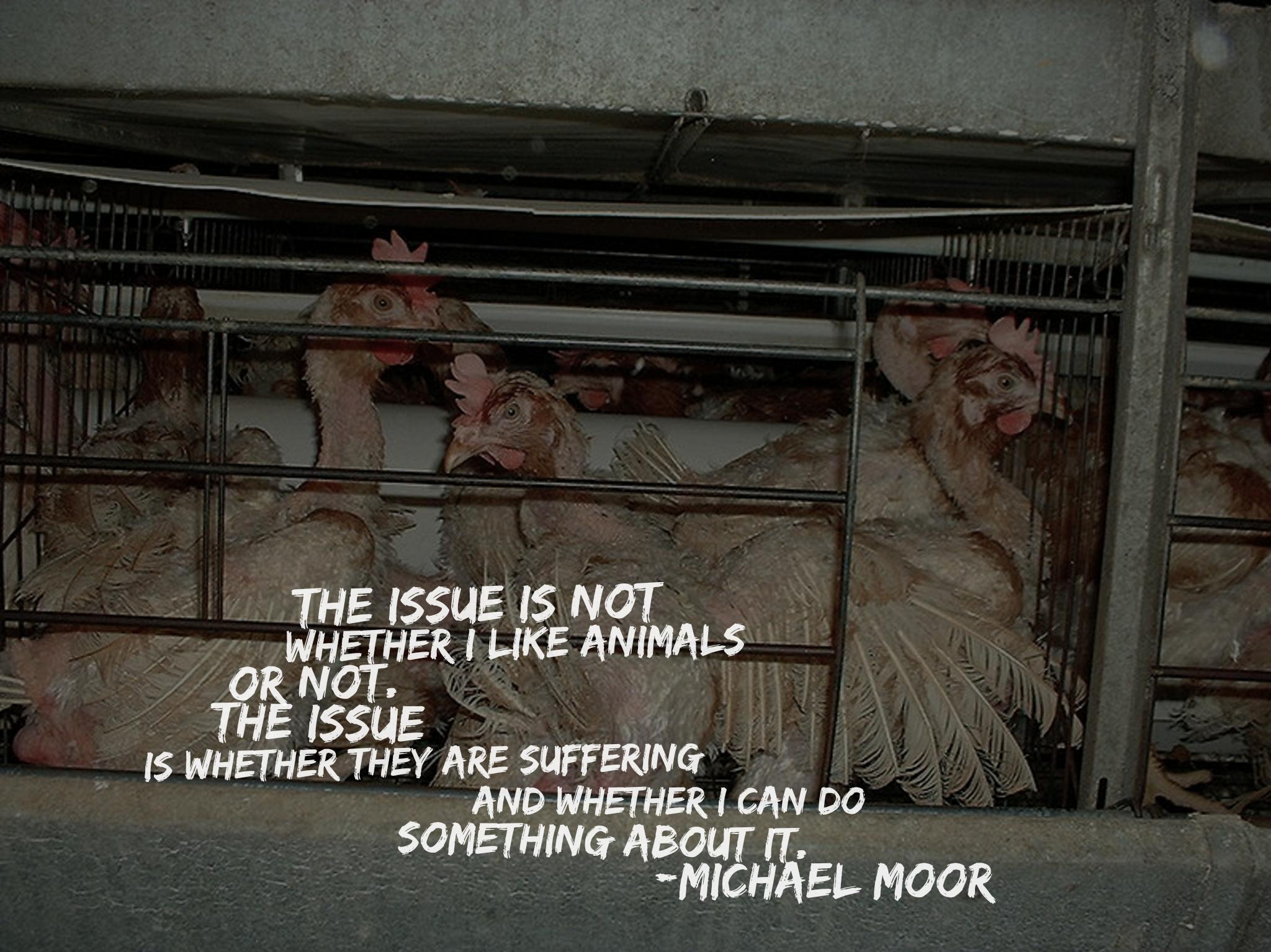"""The issue is not whether I like animals or not. The issue is whether they are suffering and whether I can do something about it."" -Michael Moor [2048×1534] [OC]"