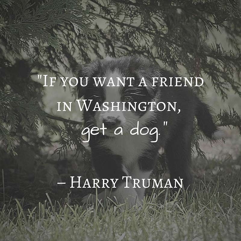 If you want a friend in Washington, get a dog. -Harry Truman- [800×800]