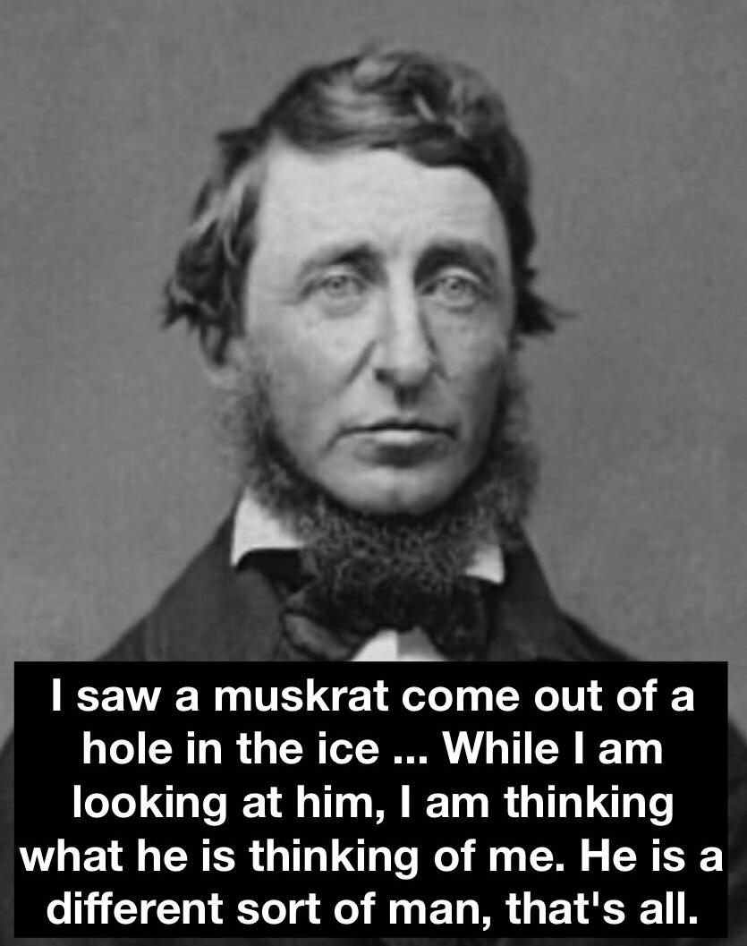"""He is a different sort of man, that's all"" Henry David Thoreau [300×400]"