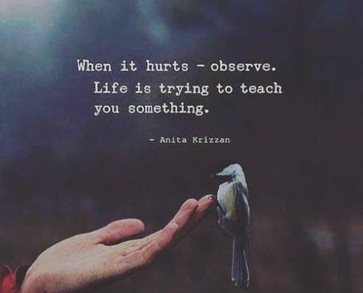 """When it hurts – observe. Life is trying to teach you something."" ~Sullybuoy. (369 x 369)"