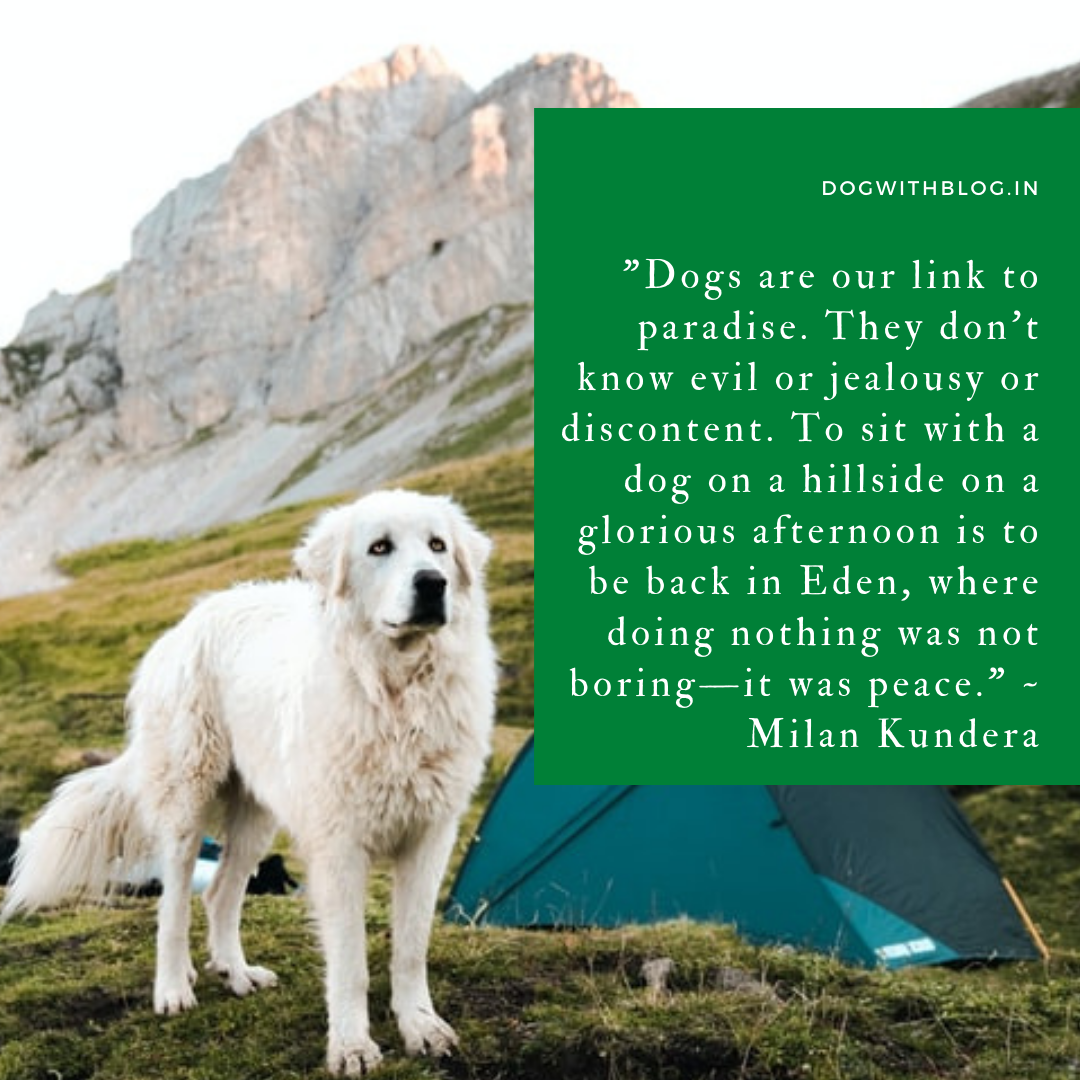 """Dogs are our link to paradise. They don't know evil or jealousy or discontent. To sit with a dog on a hillside on a glorious afternoon is to be back in Eden, where doing nothing was not boring—it was peace."" ~ Milan Kundera [1080*1080]"